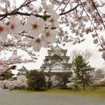 伊賀上野城と桜1